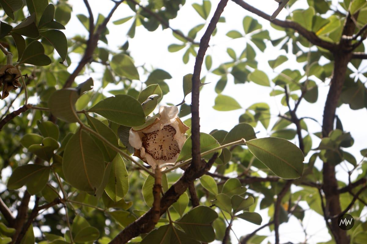 The Legendary Stories of Wish Bearing Tree Parijaat 1