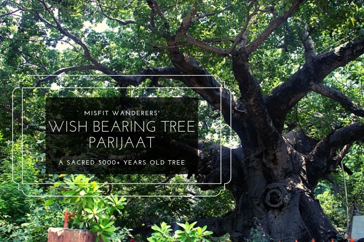 You are currently viewing The Legendary Stories of Wish Bearing Tree Parijaat