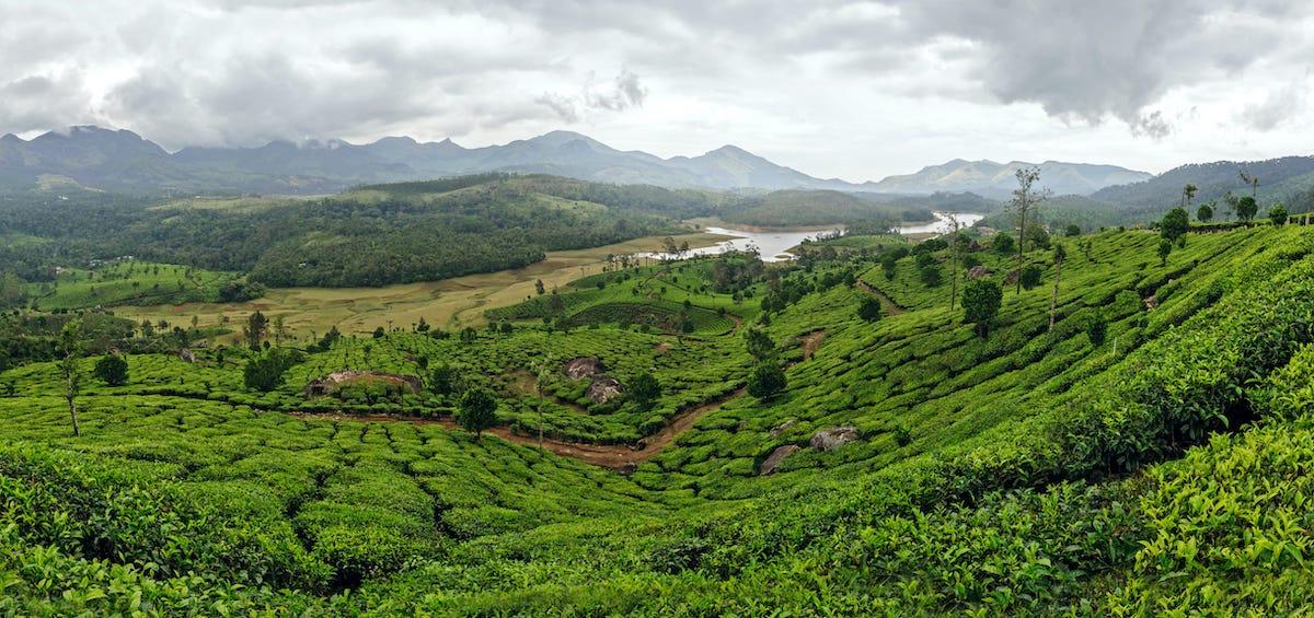 Panaromic view of Munnar
