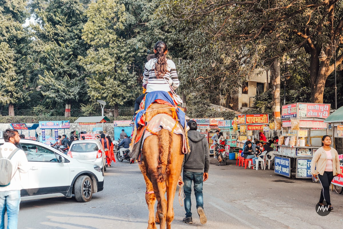 Camel Ride Fateh Sagar - Udaipur Places To Visit